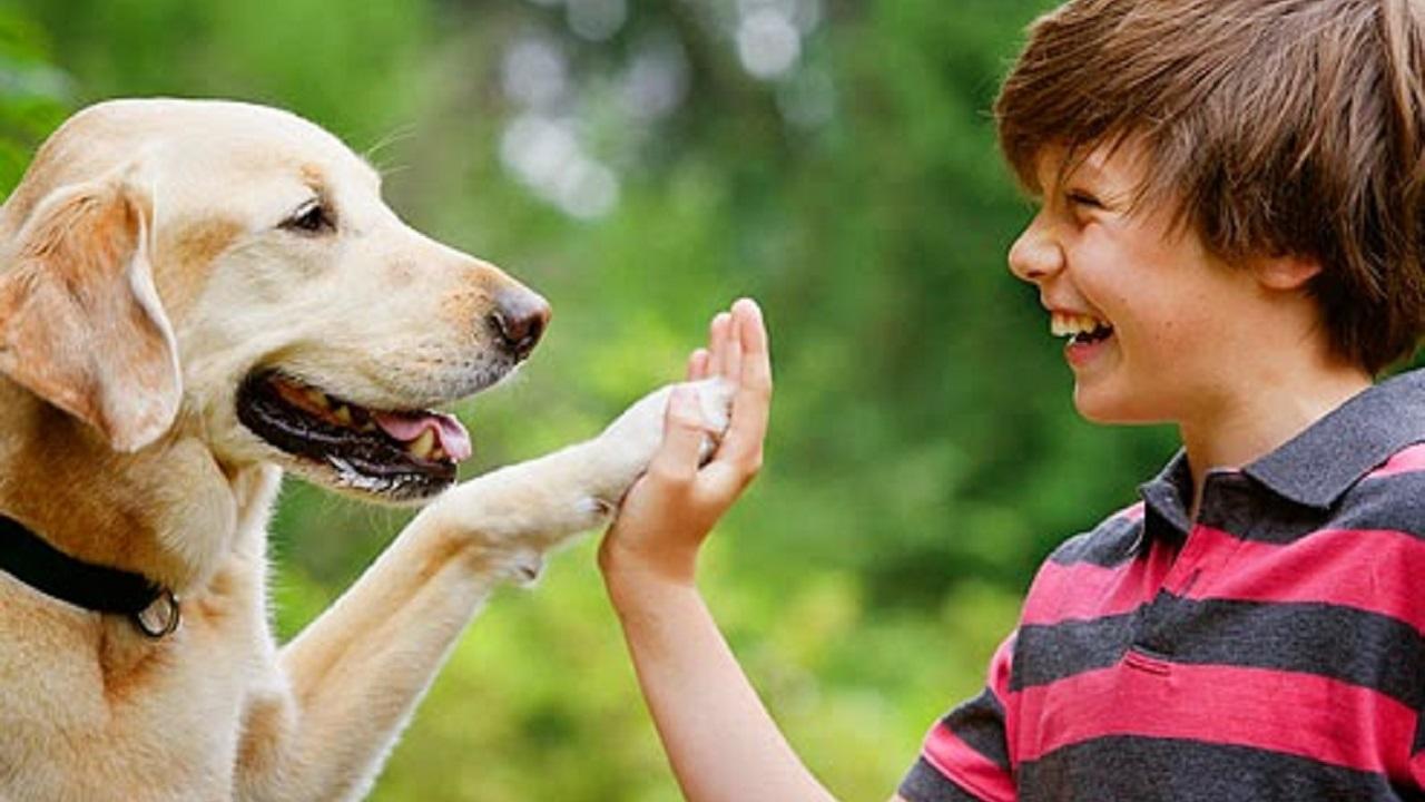 Corso di Formazione Professionale Addestramento Cani - EuroFormation Scuola di Formazione Digitale e Corsi Online