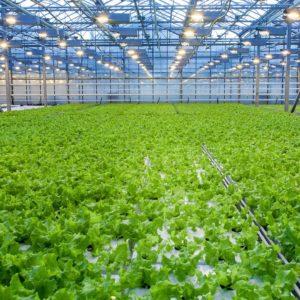 Corso di Formazione Agricoltura Idroponica - EuroFormation Scuola di Formazione Digitale e Corsi Online